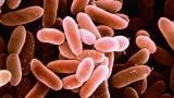 Vi khuẩn trong táo caramel Mỹ gây sẩy thai, dị tật?