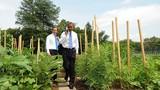 Ngưỡng mộ vườn rau sạch của phu nhân Tổng thống Obama