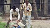 Kinh hoàng bé trai Ấn Độ  bị khỉ cắn xé