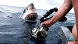 Khiếp vía giáp mặt cá mập trắng lớn dính đầy máu tươi