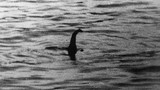 Quái vật huyền thoại bất ngờ xuất hiện trên sông Thames?