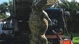 Cá sấu khổng lồ chui cống làm tắc cả đường ống