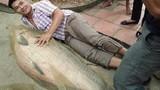 Vật vã bắt cá trắm khổng lồ nặng 52kg tại hồ Núi Cốc