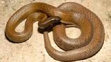 Sự thật thú vị về 11 loài rắn độc trên thế giới