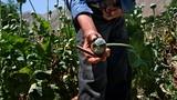 Thổ Nhĩ Kỳ: Địa điểm trung chuyển, chế biến ma túy Afghanistan