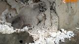 Thêm nghi vấn cầu bê tông cốt xốp ở Hà Nội đầu tư 65 tỷ
