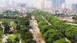 Ngắm hàng cây xanh mướt trên đường Phạm Văn Đồng trước khi chặt hạ