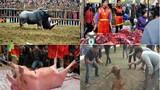 Nhức nhối trò mua vui đẫm máu với vật nuôi