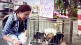 Bà Tưng bất ngờ đổi nghề đi bán chó?