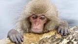 Đặt tên khỉ giống tiểu công chúa Anh, vườn thú bị ném đá