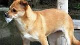 Một phụ nữ mang bầu bị chó dại cắn tử vong