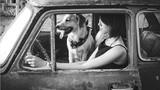 9X Hà thành cùng hai chú chó đi khắp thế gian