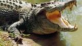 Bé trai đi bơi bị cá sấu dài 4 mét nuốt chửng