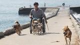 Rơi lệ chuyện đàn chó giúp chàng tật nguyền trên đảo Lý Sơn