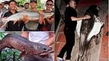 Xôn xao hàng loạt thủy quái quý hiếm dính lưới ở Việt Nam