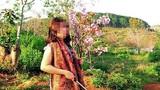 Xác minh vụ phó giám đốc Sở tư pháp Bình Thuận bẻ hoa anh đào