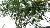 Ngắm vườn hồng bạc tỷ, trăm loại khoe sắc ở ngoại ô Hà Nội