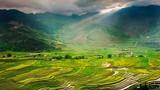 Chùm ảnh: Ngày hè tuyệt đẹp trên miền sơn cước Mù Cang Chải