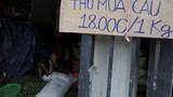 Dân làng ồ ạt hái cau non bán sang Trung Quốc