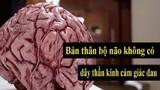 8 sự thật thú vị ít ai biết về não bộ