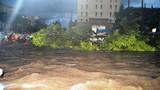 Cây xanh khổng lồ trôi lềnh bềnh giữa phố Buôn Ma Thuột