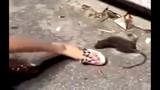 Trêu đùa chuột ốm yếu, thiếu nữ nhận hậu quả khủng khiếp