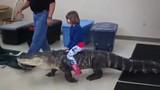 Bé gái cưỡi cá sấu khổng lồ gây sốt mạng