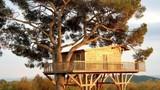 Chiêm ngưỡng những ngôi nhà trên cây vô cùng độc đáo