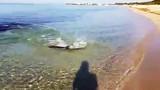 Kinh hãi cảnh cá mập lao vào bãi tắm để săn mồi