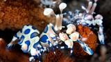 Vẻ đẹp tuyệt mỹ của sinh vật bí ẩn dưới đáy biển