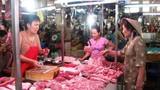 Sốc: giá lợn 10.000 đồng/kg, Hà Nội diệt bớt lợn nái