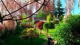 Vườn hoa đẹp như cổ tích của phụ nữ Việt ở Praha
