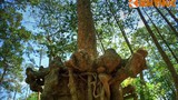 Lạc vào rừng cổ thụ kỳ quái giữa thành phố ở VN