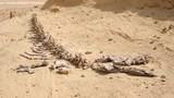 Giải mã nghĩa địa cá voi khổng lồ giữa châu Phi