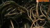 Cận cảnh cây cổ thụ kỳ quái nhất Sài Gòn