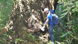 Cây cổ thụ quý xanh tươi suốt 7 thế kỷ ở rừng Cát Tiên