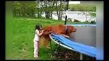 Clip hài: Sự ngớ ngẩn khó đỡ của loài chó