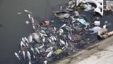 Bình Dương: Cá chết trắng hồ thủy lợi Từ Vân 1