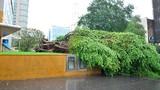 Hàng loạt cây xanh bật gốc đè người trong giông lốc ở TP HCM