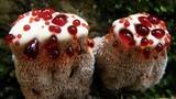 Những loài thực vật kỳ lạ khắp hành tinh