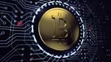 """""""Thợ"""" đào Bitcoin phòng thủ trước khủng bố mạng như thế nào?"""