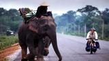 Thú nuôi voi độc nhất vô nhị của đại gia Lào