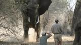 Những loài động vật giết người nhiều nhất thế giới