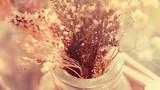 Cắm hoa khô, hoa giả có phạm cấm kỵ phong thủy?