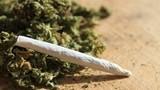 Cảnh báo ngộ độc cỏ Mỹ ẩn dưới điếu thuốc lá