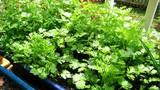 Những loại rau xanh có khả năng trị mụn 'thần kỳ'