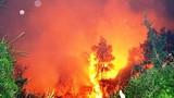 Cháy rừng tràm, dân ôm tài sản tháo chạy trong đêm
