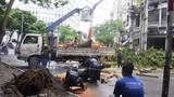 TP HCM: Mưa bão làm cây xanh ngã đổ, chập điện