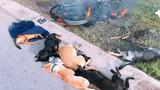 Dân vây đánh, đốt cháy xe máy của 2 kẻ trộm chó