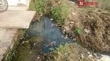 Kinh hãi rau muống tưới nước cống được bán ở Hà Nội